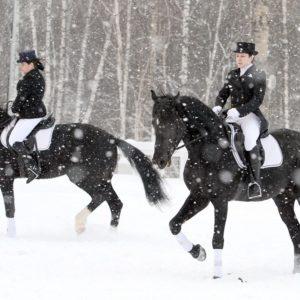 На лошадях в Усадьбу Ясная Поляна